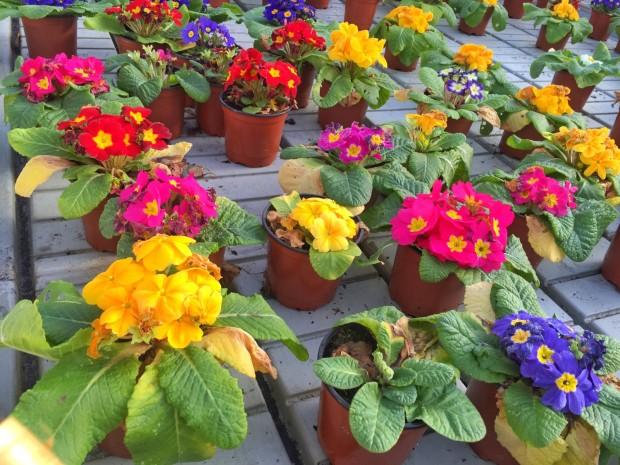 Karabeleko Hernani Producto Ecológico Flores comestibles