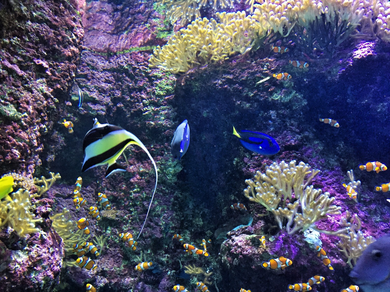Planes para el ltimo fin de semana de febrero sisters - Aquarium donosti precio ...