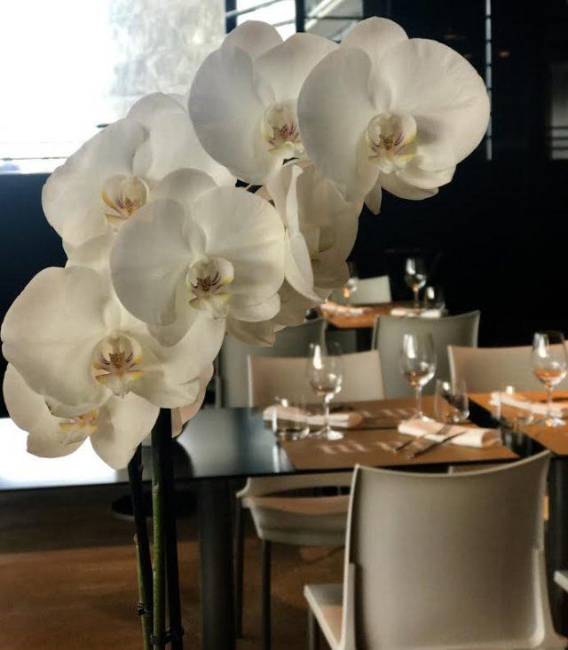 orquideas ni neu san sebastian restaurante donostia