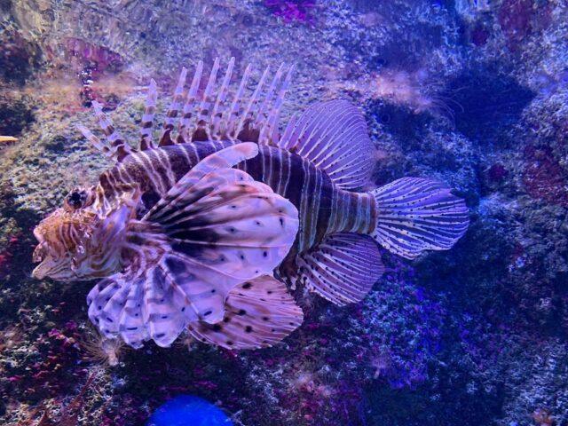 AquariumSS