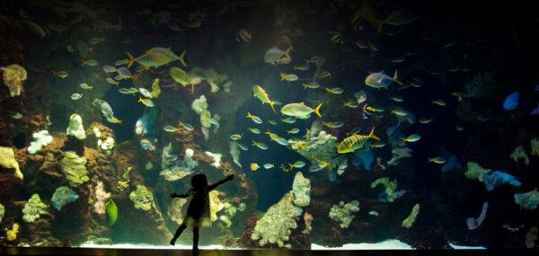 Aquarium SS
