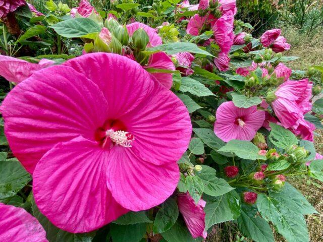 lur_garden